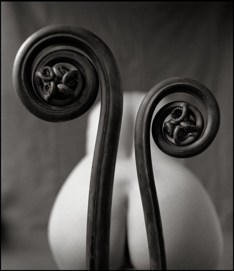 mark-arbeit-fiddlehead-fern-2000